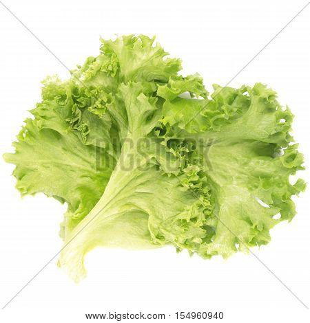 Fresh green lettuce leaves isolated on white background
