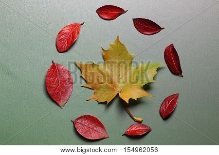 autumn leaves background on a green isolated table concept nature