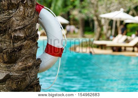 White lifebuoy hang on coconut tree at swimming pool for lifesaver