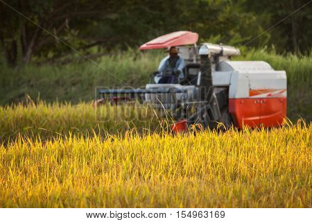 Harvesters for rice harvesting work. Harvesters and harvesting machines agricultural fields rice agriculture.(Focus on Rice)