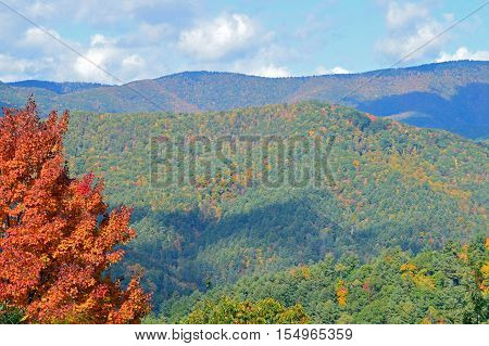 Orange tree in the foreground of fall colors on the Great Smoky Mountains