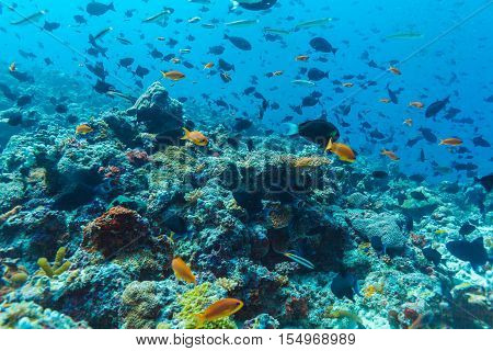 Many Different Colorful Fishes In Ocean Blue Background