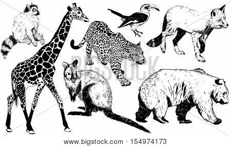 Hand Drawn Animal (giraffe, Leopard, Fox, Kangaroo, Bear, Ring - Tailed Lemur, Toucan)