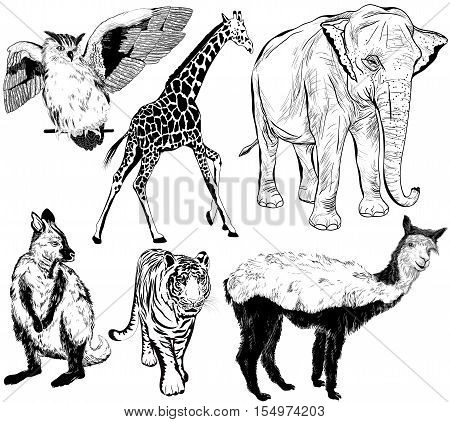 Hand Drawn Animal (alpaca, Ring - Tailed Lemur, Giraffe, Eagle-owl, Elephant, Tiger, Vulture)