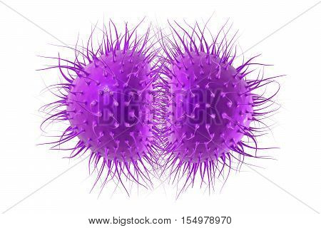 Bacteria Neisseria gonorrhoeae or Neisseria meningitidis, gonococcus and meningococcus, 3D illustration. Bacteria which cause gonorrhoeae. Bacteria which cause meningitis
