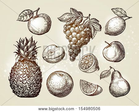 Collection fruits sketch. Hand drawn elements such as apple, pineapple, pear, grapes, orange, lemon Vector illustration