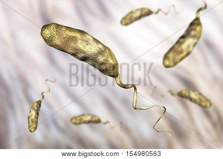 Vibrio cholerae bacterium, 3D illustration. Bacterium which causes cholera poster