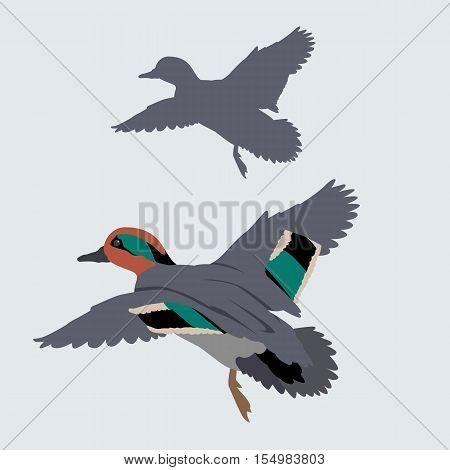 wild duck vector illustration style Flat set