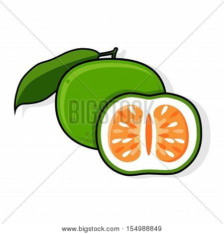 Green Grapefruit, Jaffa Sweetie. Oroblanco,  Vector illustration