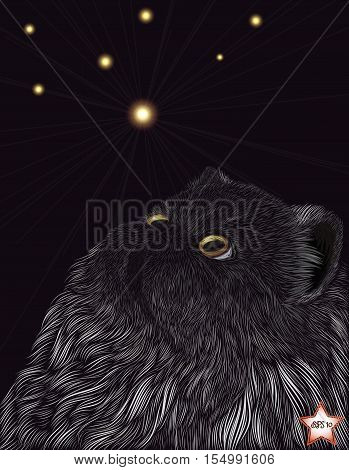 Vector illustration. Persian smoky cat looking at the stars. Freehand drawing The ability to edit the color and shape of all the elements.