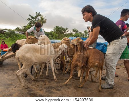 Amazon River Peru - May 13 2016: Goats on a deck of a cargo boat on the Amazon River