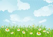Summer meadow. Vector background. poster