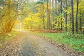Pathway through the beautiful autumn forest. Autumn forest covert. Tinted photo. poster