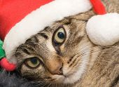 Small kitten in a cap the Santa Claus poster