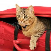 Cat in a suitcase poster