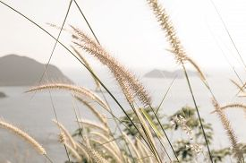 Abstract Tiny flower grass - Stock Photo