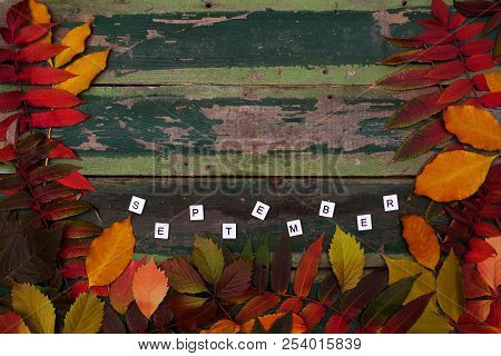 Autumn Maple Leaves Over Old Green Wooden Background With Copy Space And Text September