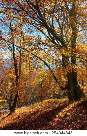 Autumn Spirits In The Woods. Wonderful Natural Background Of Trees In Reddish And Yellowish Foliage
