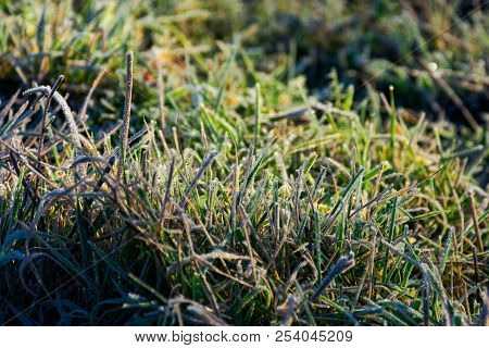 Closeup Of Grass In Rime At Sunrise. Lovely Autumnal Nature Background.