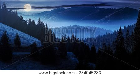 Ocean Of Fog In Forested Valley At Night In Full Moon Light. Gorgeous Panoramic Landscape In Autumn