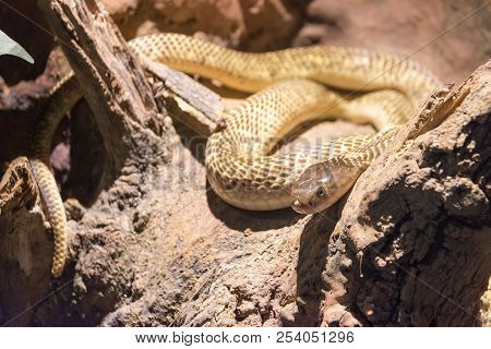 Dangerous Wild Snake, Animal Danger Attack Reptile