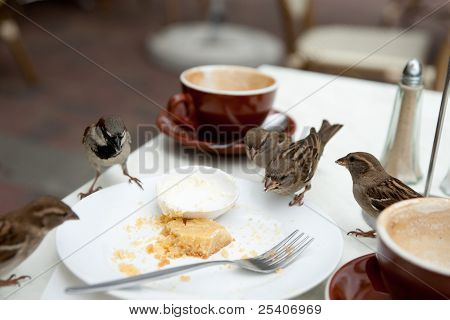 Cafe table invaded by sparrows.