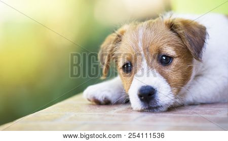 Adorable Cute Pet Puppy Thinking - Dog Therapy Concept