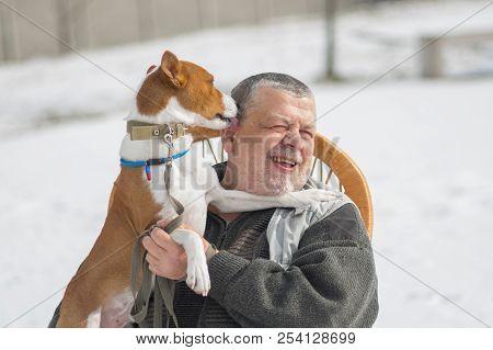 Cute Basenji Dog Licks Its Master While Playing Outdoor At Winter Season