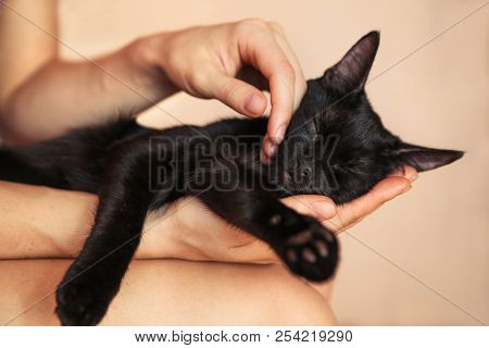 Woman Hand Petting A Cat Head, Love To Animals