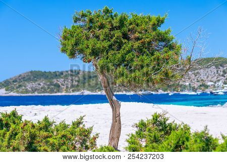Seascape With Tree And Blue Mediterranean Sea In The Background (ibiza, Spain)