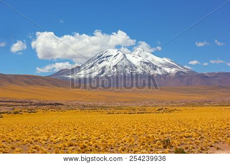 Panoramic Landscape With A Snow Peak Of Volcanic Mountains And Yellow Grass Fields Of The High Altit
