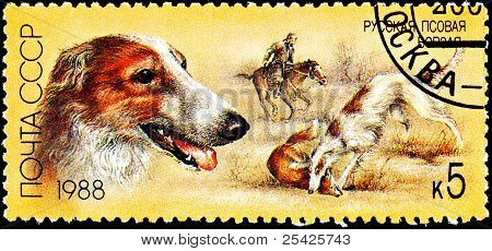 Russian Wolfhound Borzoi Fox Hunting Dog