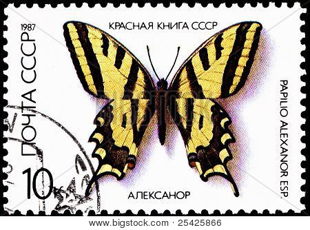 Papilio Alexanor, Yellow Swallowtail Butterfly