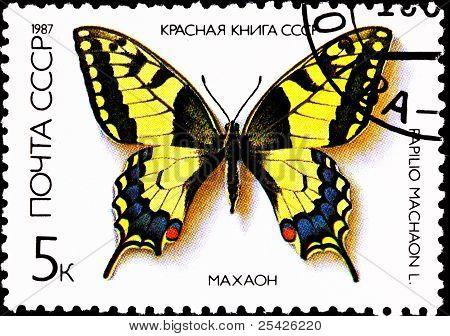Old World Swallowtail Papilio Machaon