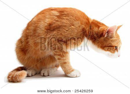 Searching Tom Cat