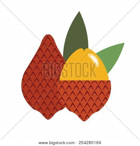 Healthy Organic Salak, Colorful Tropical Nature Fresh Fruit Objects.