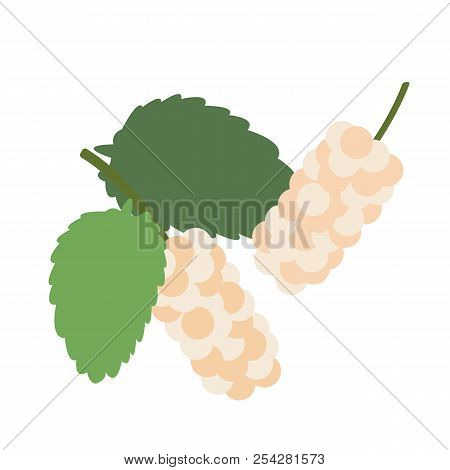 Healthy Organic White Mulberry, Colorful Tropical Nature Fresh Fruit Objects.