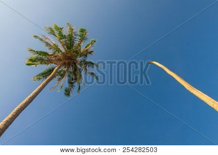 Coconut Palm And Blue Sky At Phuket , Thailand