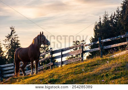 Rufous Horse Near The Wooden Fence. Beautiful Evening Scenery In Golden Light. Forested Countryside
