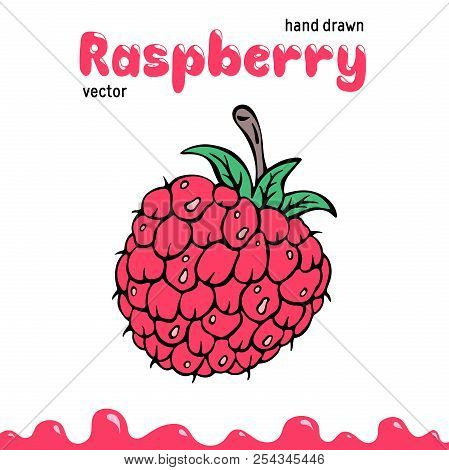 Raspberry Vector Illustration, Berry Clipart. Cartoon Raspberry Vector Illustration For Logo, Design