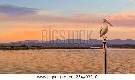 Pelican Roosting On A Boat Mooring In Mallacoota Top Lake At Sunset