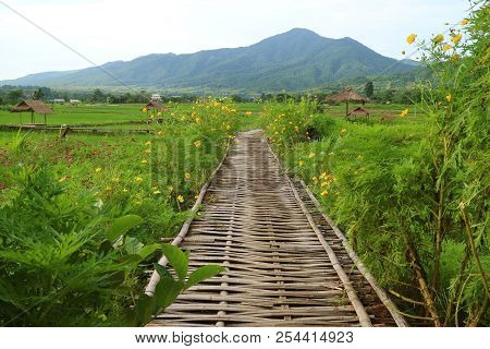 Bamboo Walkway On Vibrant Green Plantation And Paddy Field In Nan Province Of Thailand