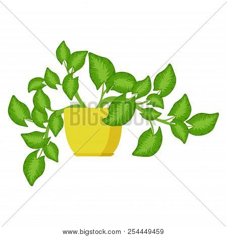 Syngonium House Plant In Flower Pot. Decorative Indoor Houseplant. Office And House Plant. Vector Il