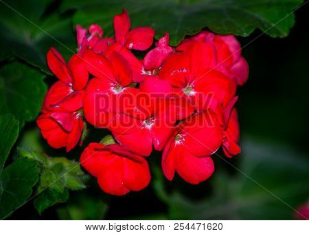 Garden With Red Flowers