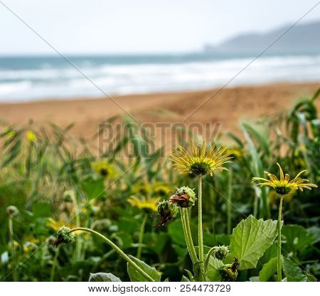 Garden With Yellow Flowers In The Beach