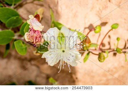 Garden With White Flowers