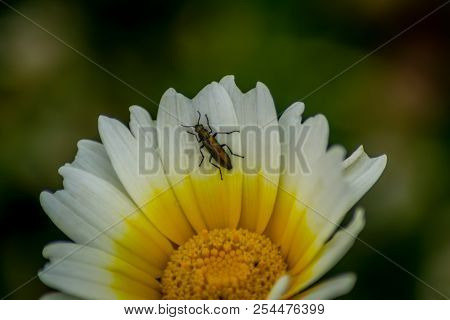 White Flower Wiith Insect