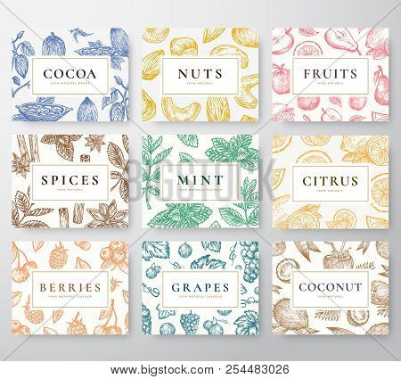 Hand Drawn Nuts, Spices And Berries With Fruits And Coconut Cards Set. Abstract Vector Sketch Backgr