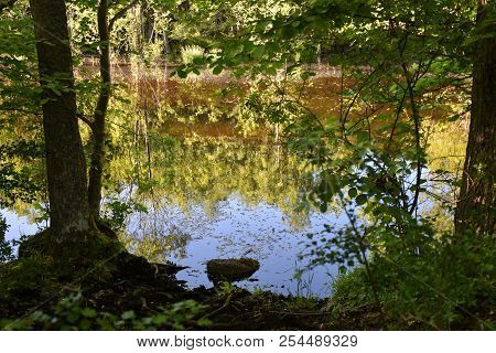Beautiful Colorful Reflections In A Small Pond In A Nature Reserve At The Island Oland In Sweden