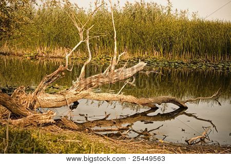 Fallen Dried Tree At The River Bed